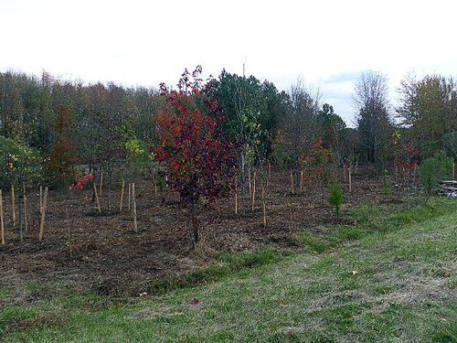 Tree planting site on I-695 in Baltimore County